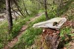 2017-04-22-Krim-Trenk-Iski_vintgar-27